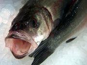 魚のタラの写真